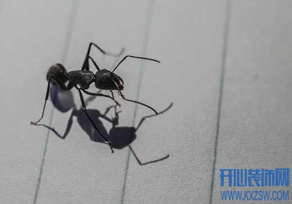 高层住宅有蚂蚁怎么办,除虫蚁有哪些办法?10个技巧小分享