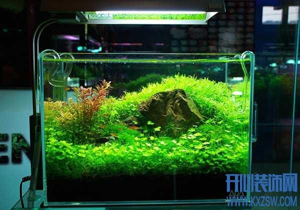 初学者怎样设计水草缸?水草造景你必须掌握的几个细节
