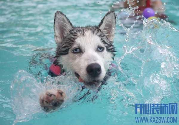狗狗初次下水之前需要准备什么,宠物狗游泳需要注意哪些问题?