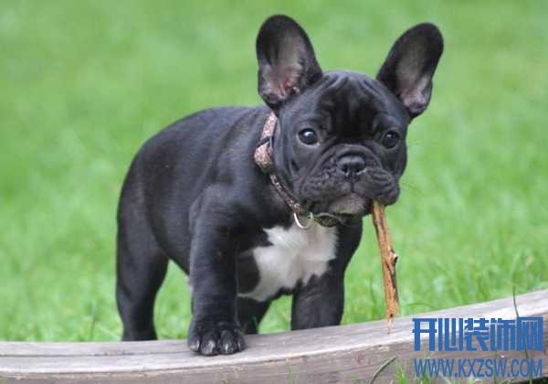 如何判断狗狗有没有吃饱?可以从排便中判断狗狗吃饱吗,狗狗在食量方面的差异