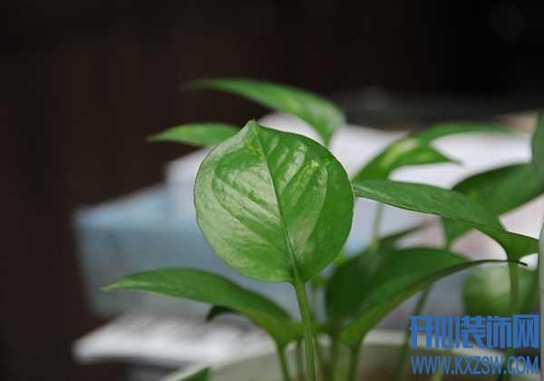 企业内部不同位置的风水植物应该如何选择和摆放