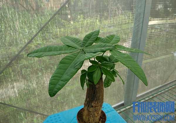 客厅想要布置落地植物,你只能想到发财树?那是你没有见识