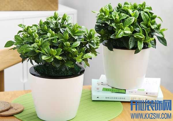 家里有个老烟鬼,哪些花草可以吸收烟味?专门吸附二手烟的绿植盆栽推荐