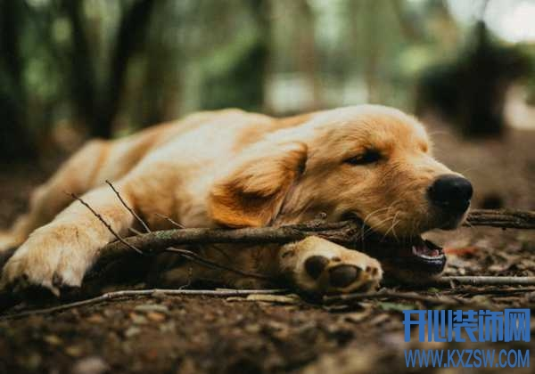 宠物狗为什么会流口水?遛完狗之后狗狗流口水是否正常?