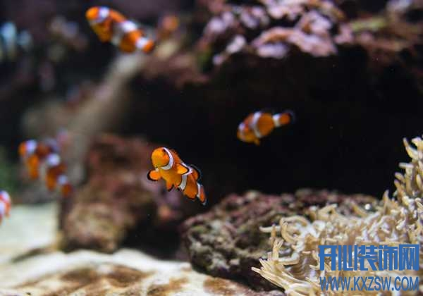 刚出生的小鱼该如何饲养?给小鱼喂养什么食物最合适