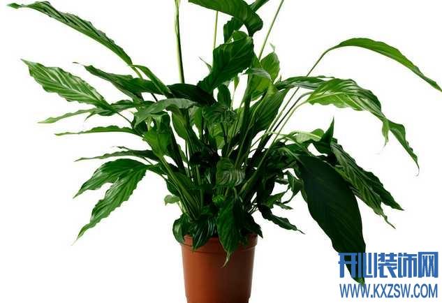 玄关放什么植物好,玄关植物风水注意事项