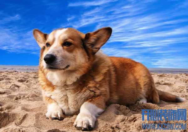 和宠物狗在玩游戏的时候需要注意哪些问题?为什么狗狗玩游戏之前需要说出指令