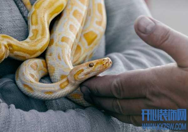 被宠物蛇咬伤该如何处理?如果有蛇牙残留怎么办,养宠物蛇需要注意什么