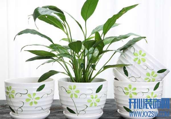 家用装饰花盆的主要材料有哪些?教你如何选择合适的装饰花盆