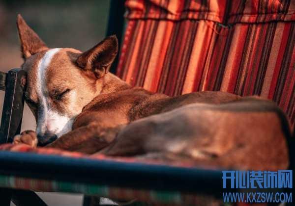 宠物狗过敏现象有哪些?食物过敏该如何处理?如何提高狗狗的免疫力