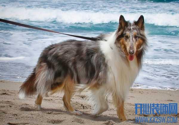 如何提高狗狗的游泳能力,狗狗在游泳的年龄,狗游泳时需要注意哪些问题